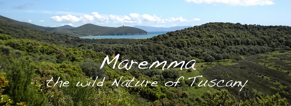 Maremma-wild-nature